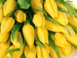 Заказать желтые тюльпаны