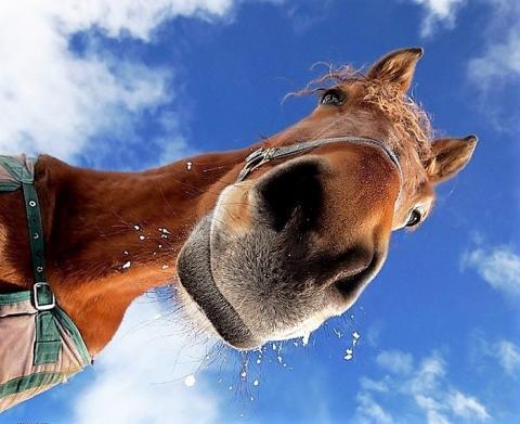 «Я не я, и лошадь не моя!», или Почему Павел Клепиков отказался от борьбы за пост президента НОПРИЗ
