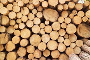 Свойства и пороки древесины
